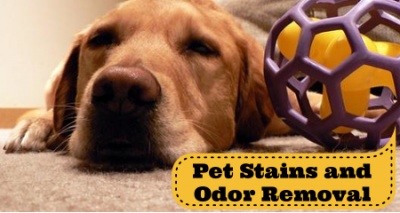 pet stains and pet odor removing in Fredericksburg and Stafford VA