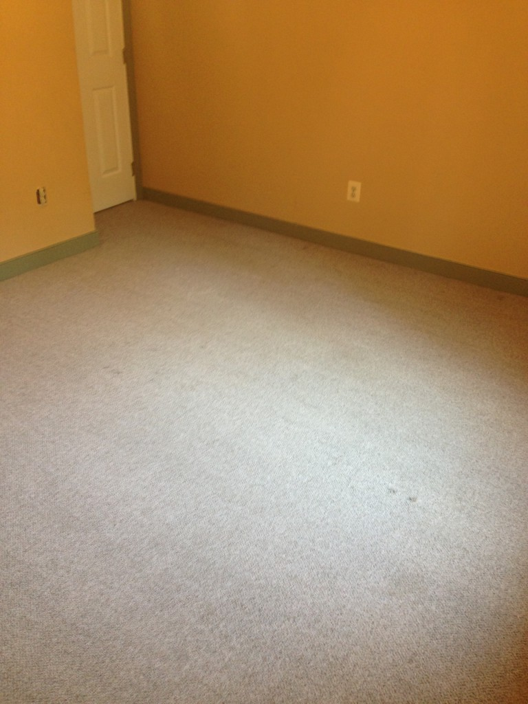 How To Remove Old Pet Stains From Carpet With Peroxide