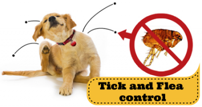tick and flea control in Fredericksburg and Stafford VA