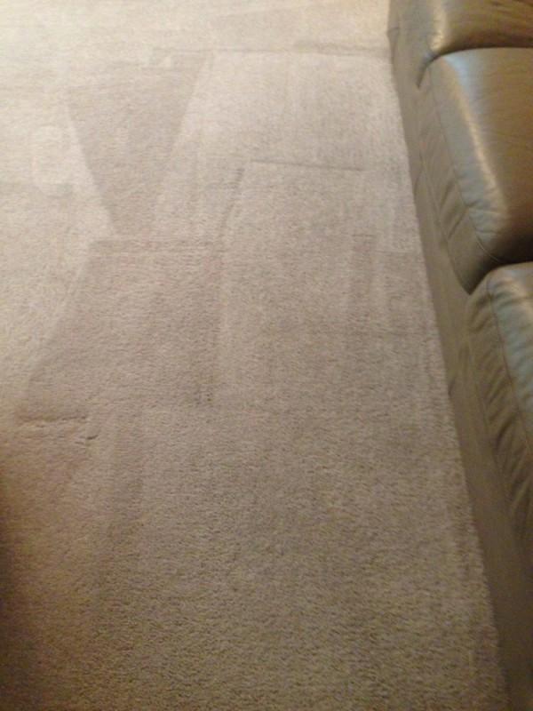 Deep carpet cleaning and grooming in Fredericksburg VA Stafford VA