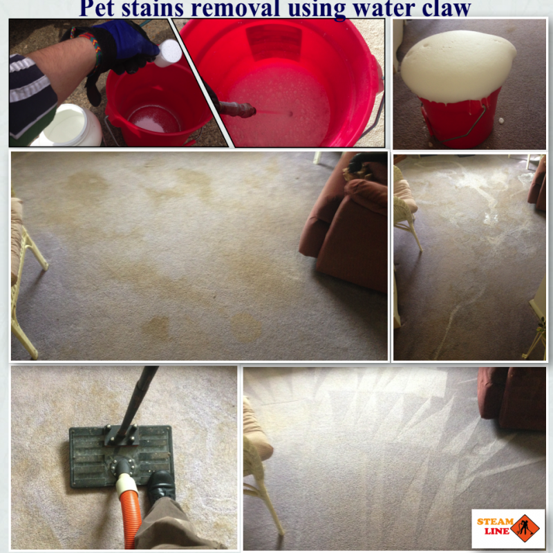 pet-stains-removal-using-waterclaw