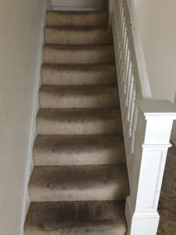 Stairs carpet cleaning and deep scrubbing in Fredericksburg VA Stafford VA