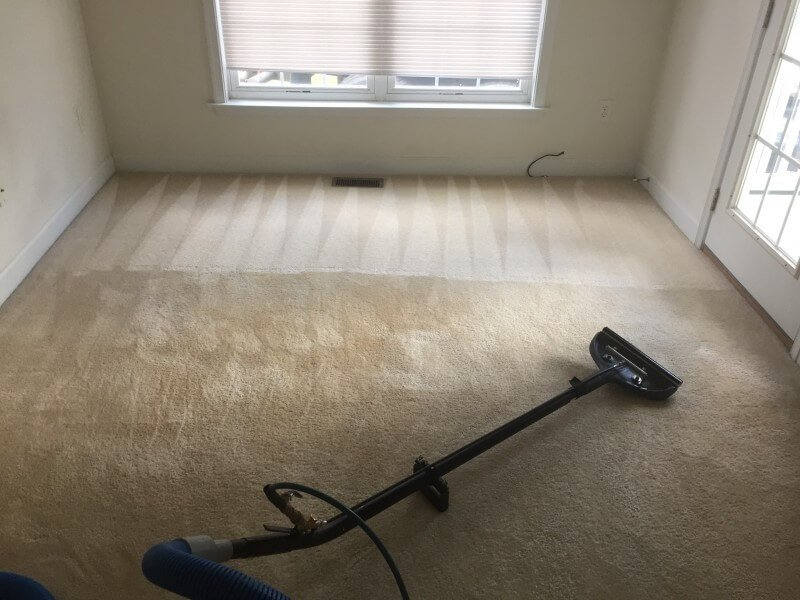 best carpet cleaning in Fredericksburg VA. Pet stains cleaning and odor removal